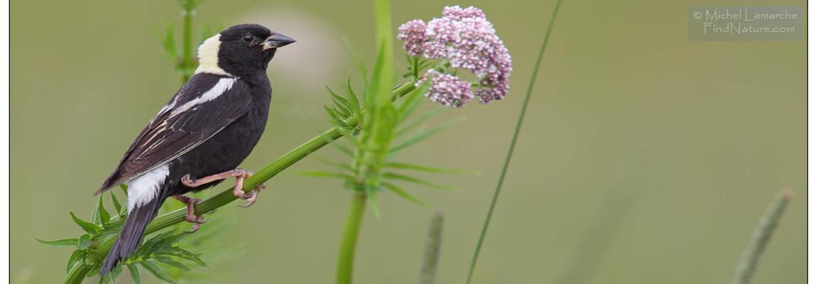 Ornithology activity
